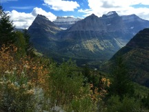 Fall colours starting to show along Going-to-the-Sun Road in Glacier National Park.