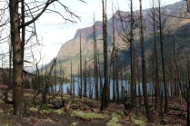Burnt trees from a recent forest fire near Saint Mary Lake in Glacier National Park.