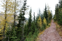 Beautiful scenery on the Upper Rowe Lake trail in Waterton Lakes National Park.