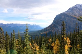 Beautiful fall colours are starting to show near Lake Louise in Banff National Park.