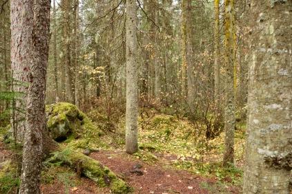 Beautiful scenery in Yoho National Park, BC.