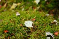 The beautiful and abundant moss in Yoho National Park, BC.