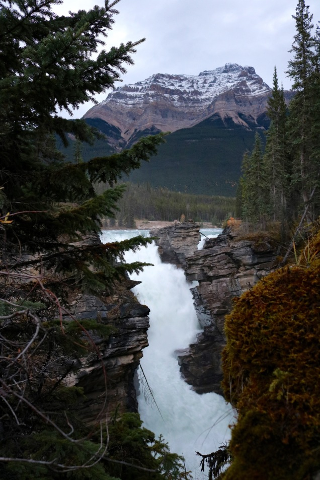 Athabasca Falls along the Icefields Parkway