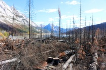 Remnants of the forest fire near Medicine Lake in July of 2015 in Japser National Park.
