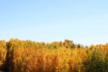 Beautiful fall colours along the highway on our way to Edmonton, Alberta.