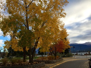 Beautiful fall colours starting to show in the town of Jasper.