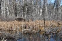 Prince Albert National Park, SK
