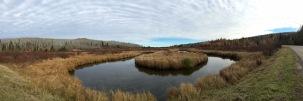 The marshlands of Prince Albert National Park, SK