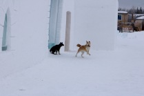 Some local pups enjoying the Snowking Castle