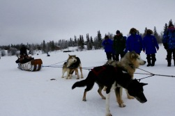 Dogsledding at Aurora Village